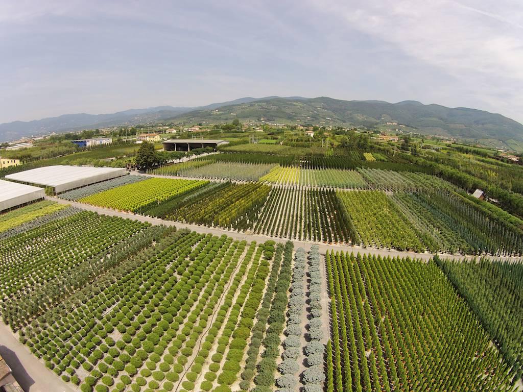 I vivai produzione for Piante da frutto pistoia