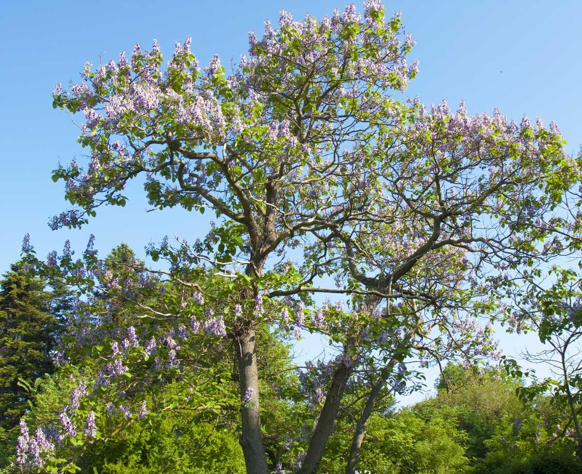 Alberi Ornamentali Da Giardino progettare-spazi-verdi-con-alberi-profumati blog-vivai-piante